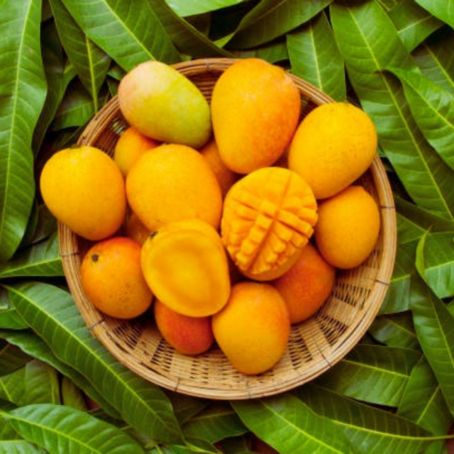 Fresh Mango – Dasheri