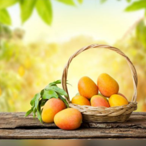 sindhri mangoes for fresh fruits delivery in Pakistab